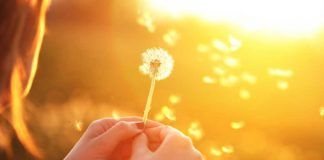 Ir em busca da felicidade