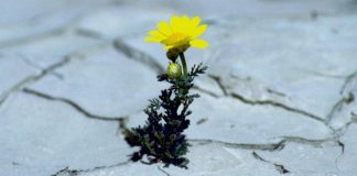 Catequese e espiritualidade Como enfrentar as provações?