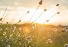 espalhar amor e ressurreição