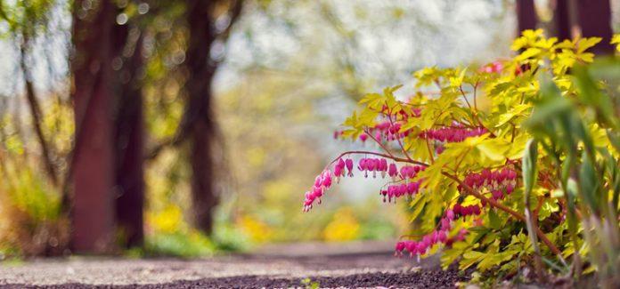 caminho com flores