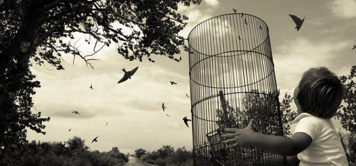 desprendimento. Criança solta passarinho da gaiola