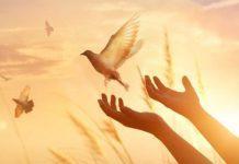 ter esperança é como um passaro em liberdade que voltará