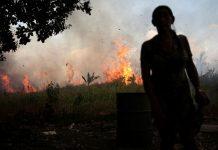 destruir a natureza queimadas