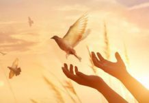A relevância de uma verdadeira cultura da paz